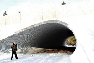 В Беларуси начинают осваивать подземные переходы для диких животных